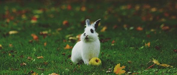 Le temps d'un lapin