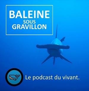 Baleine sous Gravillon